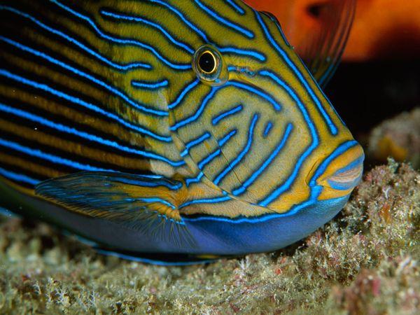 рыба (600x450, 61Kb)