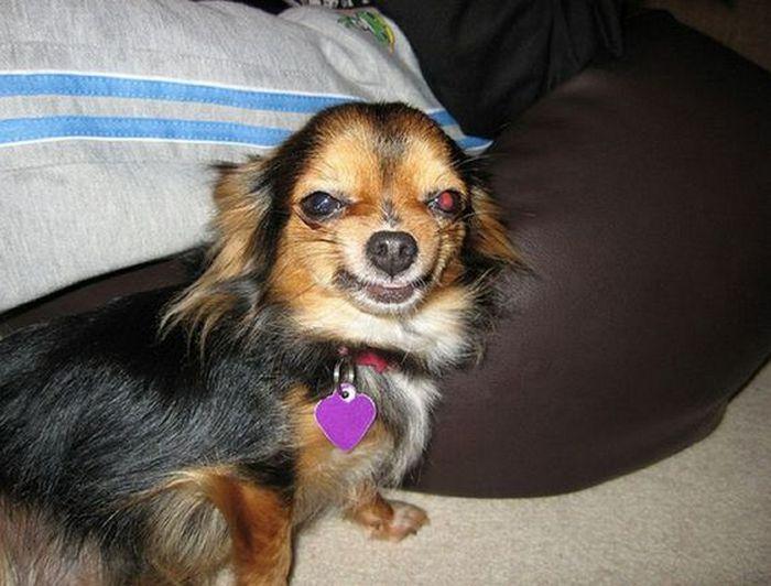 Улыбающаяся собака