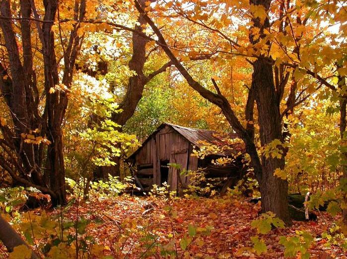 золотая осень (700x522, 851Kb)