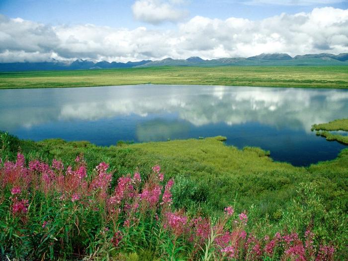 Alaska Range, Alaska (700x525, 335Kb)