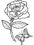Превью color_rosebutterfly.gif (480x640, 144Kb)