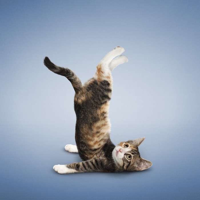Yoga_Kittens_2 (700x700, 72Kb)
