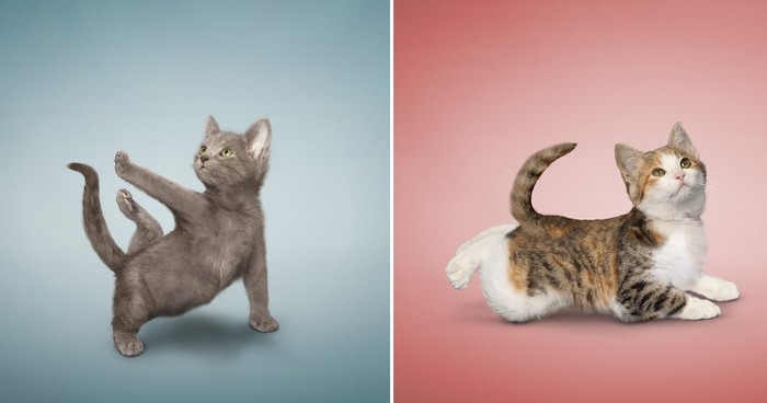 Yoga_Kittens_6 (700x368, 35Kb)