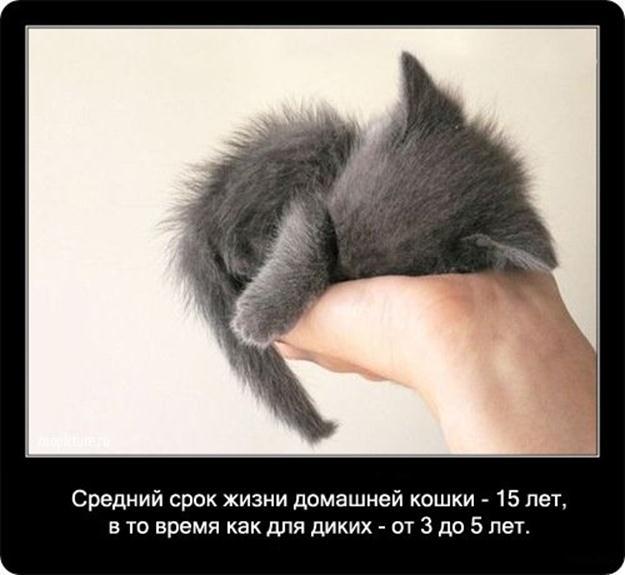 Фотки кошек собраны по всему интернету, так что возможно 20 января