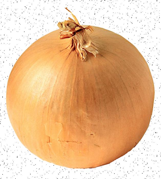 white onion copy (629x700, 510Kb)