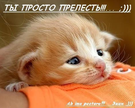 _ты росто прелесть кошка (470x378, 30Kb)