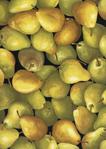Превью fruit-c7748-pear (497x700, 375Kb)