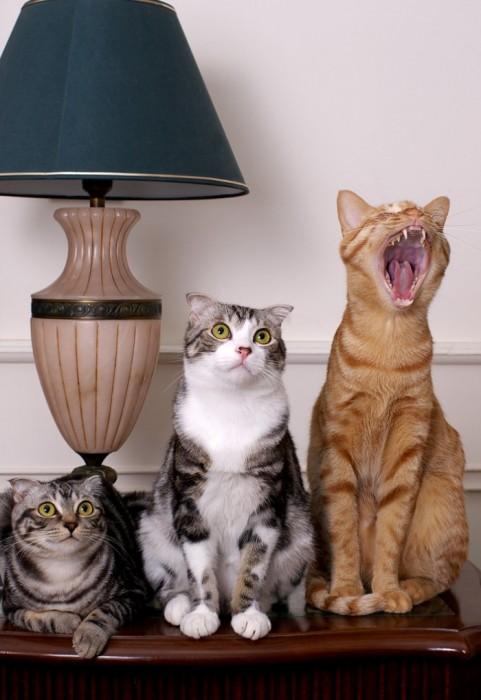 Дизайны котов для форумов
