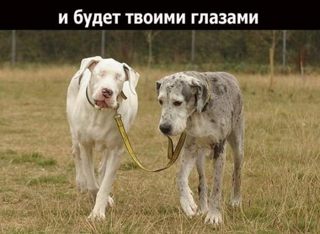 1328477600_1328208293_friend_09 (640x468, 194Kb)