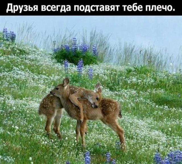 1328477607_1328208262_friend_11 (640x576, 280Kb)