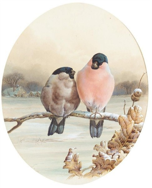 BULLFINCHES ON A WINTER'S DAY (485x600, 56Kb)