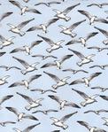 Превью bird-c8686-sky (500x612, 135Kb)