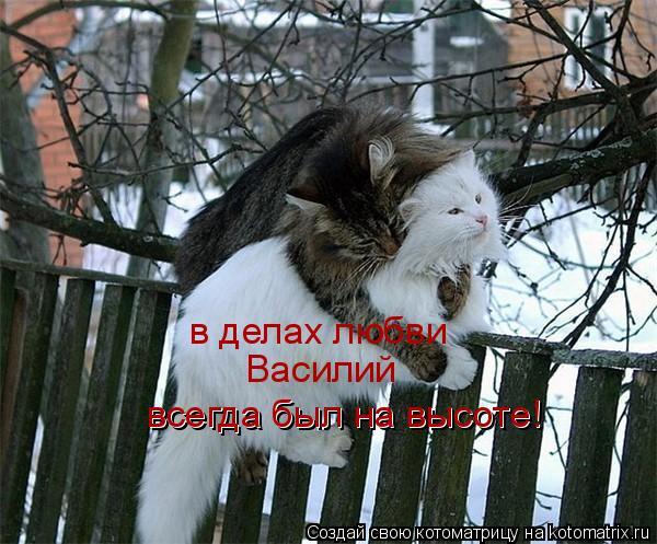 кот и любовь (600x497, 69Kb)