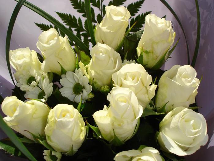 3241851_trandafirialbicorina (700x525, 54Kb)