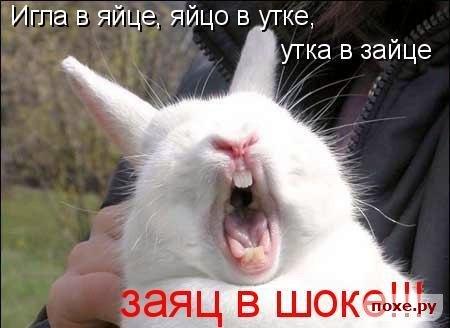 3821971_1246170946_1245945149_1229156330_45kotov (450x328, 31Kb)