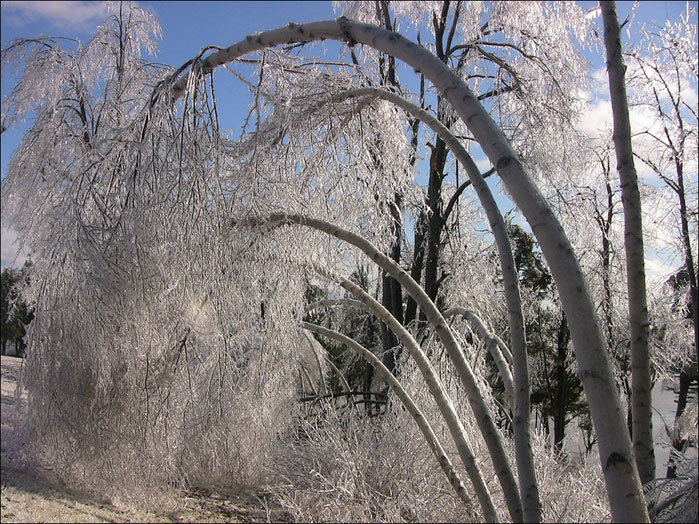 ледяной дождь/4348076_ledyanoi_dojd_2 (699x524, 162Kb)
