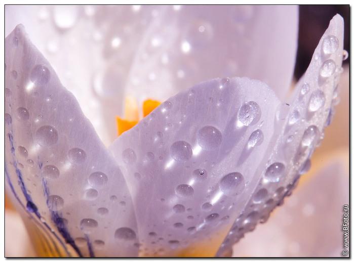 Цветы высокого разрешения макро