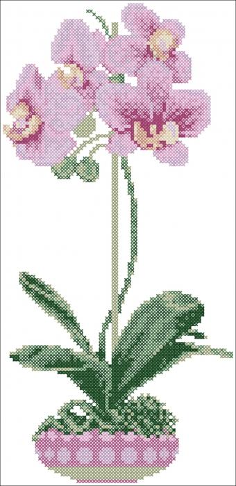 Вышивка крестом бесплатные схемы орхидея