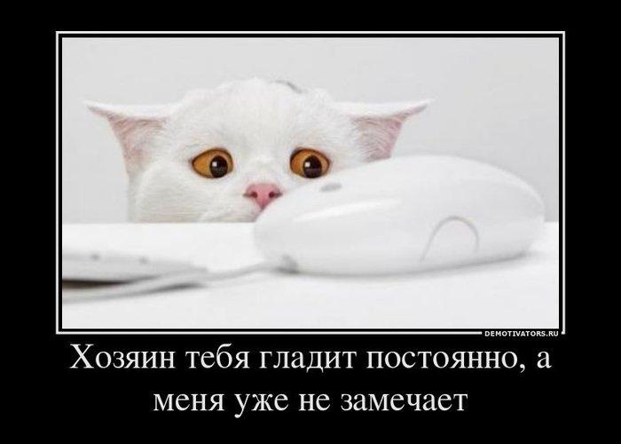 А вас домашние питомцы еще не ревнуют к ЛИ.РУ? :)