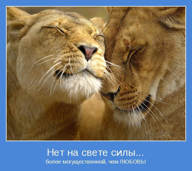 Любовь мотиватор 3 (644x574, 106Kb)