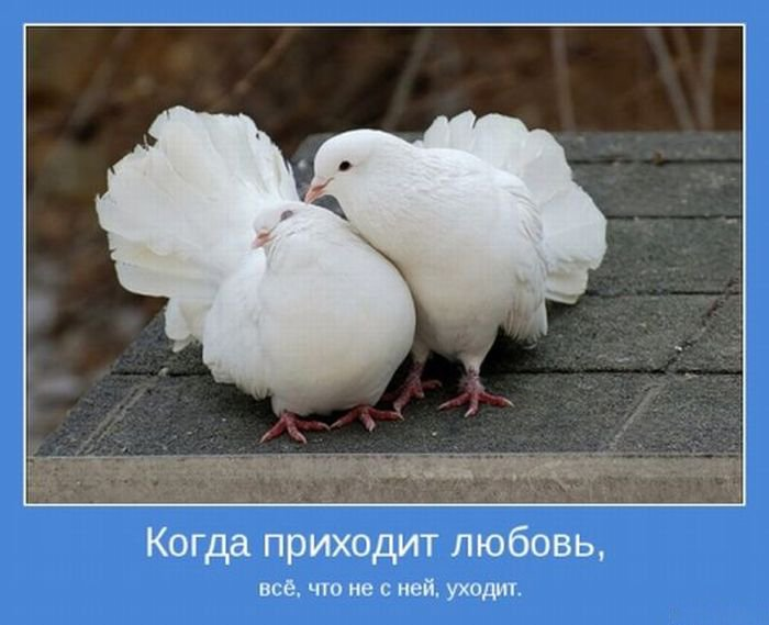 Любовь мотиватор 24 (700x569, 55Kb)