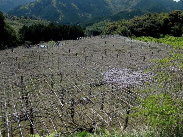 16-Kawachi Fuji Garden (700x525, 163Kb)