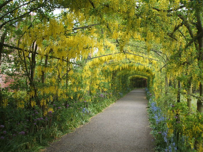 24-Wisteria Tunnel (700x525, 163Kb)