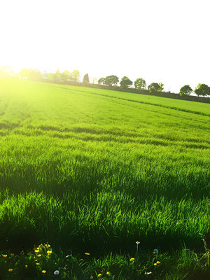 grass_by_AniMal_e (300x400, 38Kb)