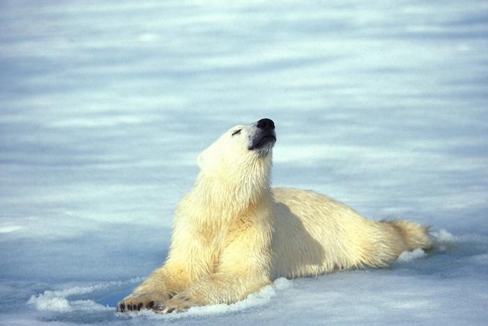 мир животных хищники картинки