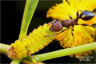 муравьи (400x266, 24Kb)