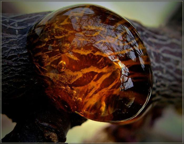 Янтарь камень фото 19 фотография