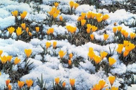 весна3 (450x300, 88Kb)