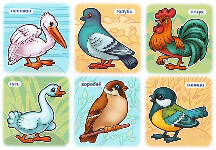 птицы-3 (700x484, 162Kb)