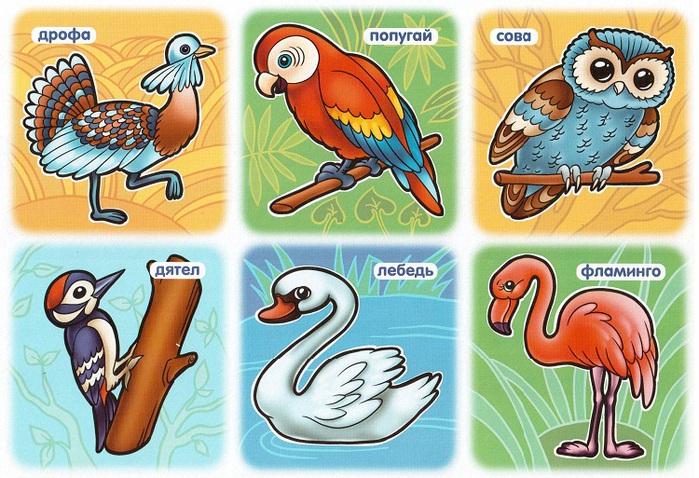птицы-4 (700x478, 173Kb)