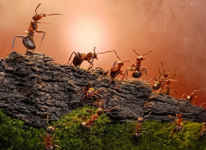 муравьи1 (700x511, 100Kb)