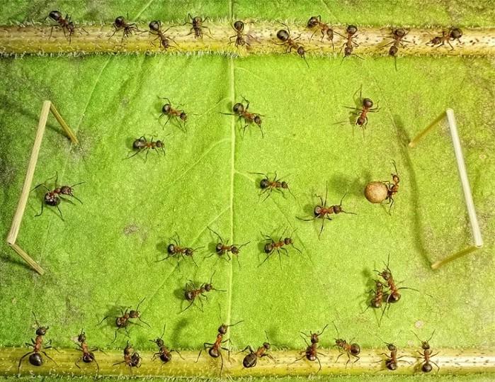муравьи3 (700x539, 166Kb)