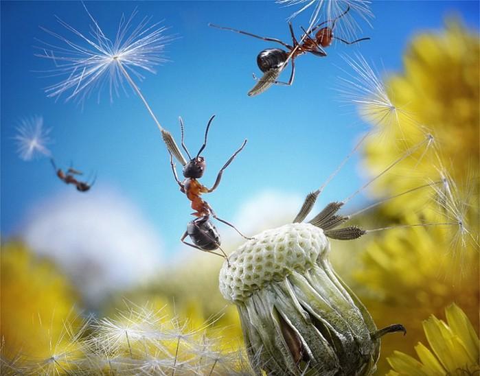 муравьи5 (700x548, 94Kb)