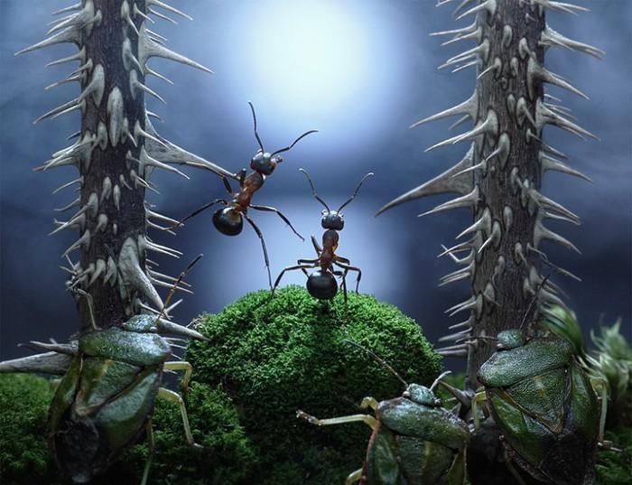 муравьи11 (700x537, 108Kb)