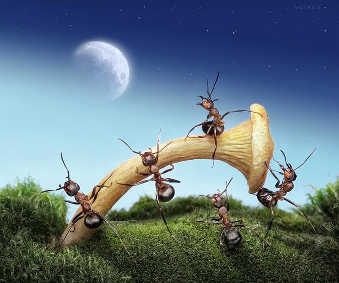 муравьи13 (700x583, 177Kb)