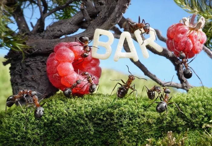 муравьи15 (700x482, 134Kb)