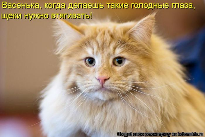 kotomatrix_13 (700x467, 46Kb)
