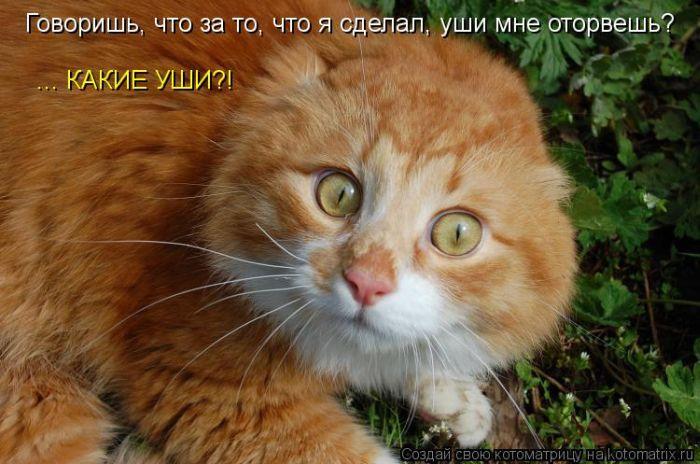 kotomatrix_38 (700x464, 64Kb)