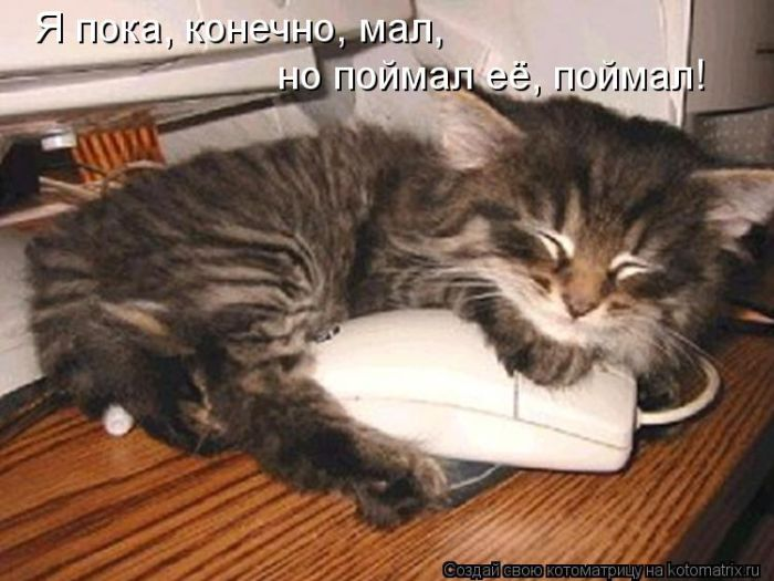 kotomatrix_47 (700x525, 59Kb)