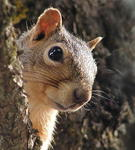 ������ funny-rodent (541x600, 62Kb)