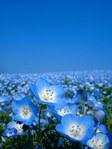 ������ Blue (525x700, 64Kb)
