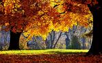 ������ The-best-top-autumn-desktop-wallpapers-1 (640x400, 242Kb)
