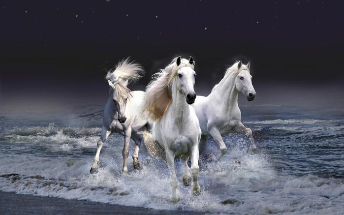 белые лошади (700x437, 83Kb)