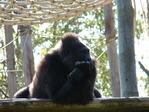 Превью обезьяны в лиссабонском зоопарке (3) (700x525, 306Kb)