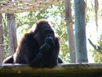 Превью обезьяны в лиссабонском зоопарке (2) (700x525, 304Kb)