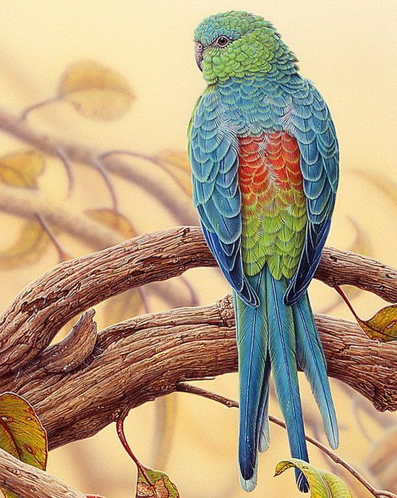 птицы от Christopher Pope2 (559x700, 208Kb)